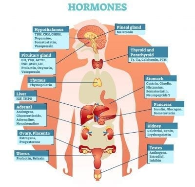 hormones on different parts of the body