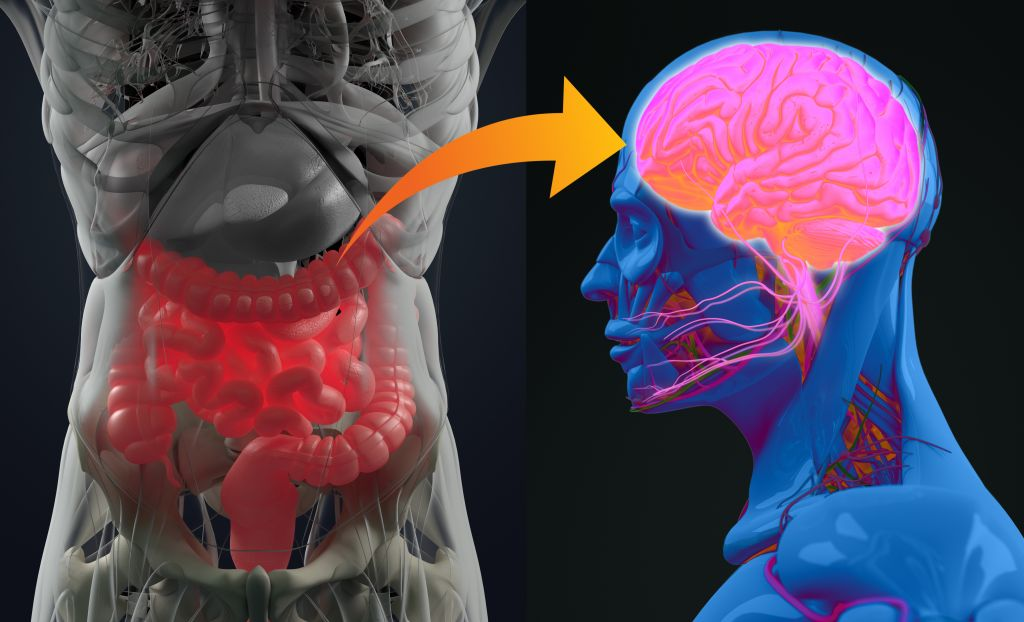 How to Heal the Vagus Nerve Naturally - Gut-brain connection or gut brain axis