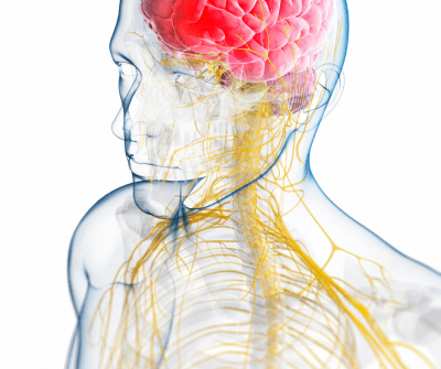 How to Heal the Vagus Nerve Naturally - vagus nerve